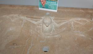 Détail de la roussette sculptée dans la vasque du lavabo en pierre